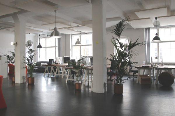 juiste planten kantooromgeving