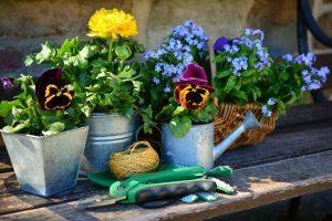 Nieuwe planten voor in de tuin kopen