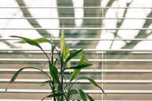 Wat zijn de voordelen van bamboe jaloezieën in huis