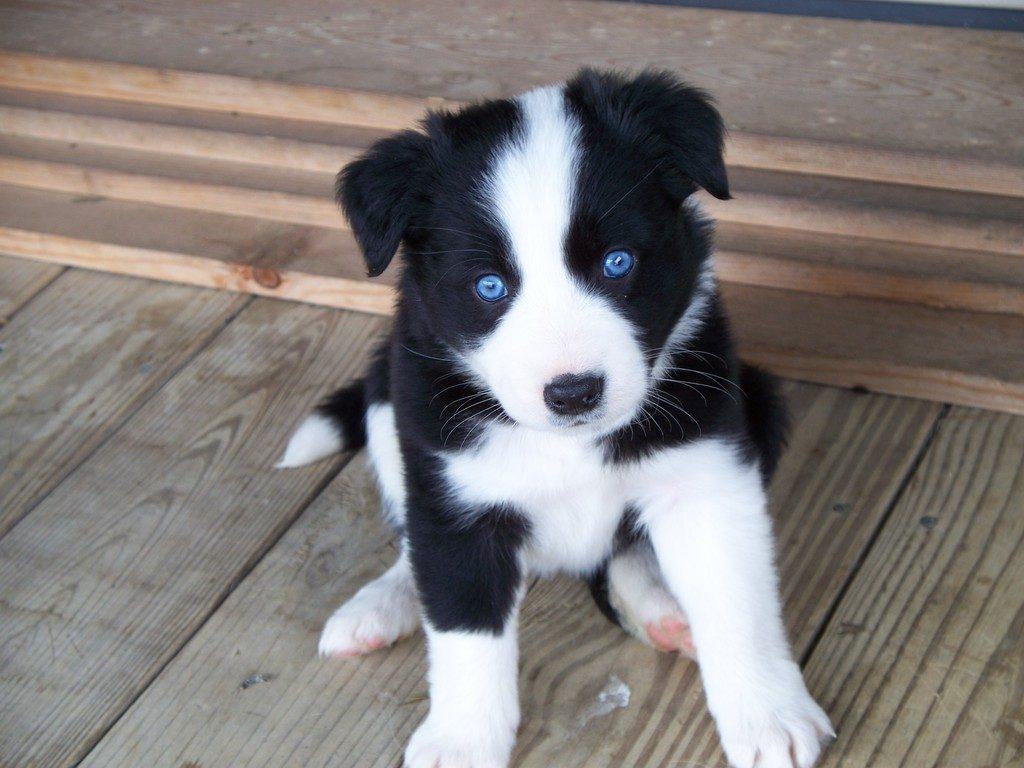 Wat is er aan de hand als een hond over de grond schuift?