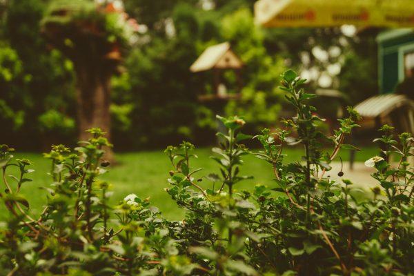 Zo geniet je optimaal van je tuin